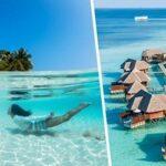 Тур на Мальдивы Мале 69 981 руб. чел.